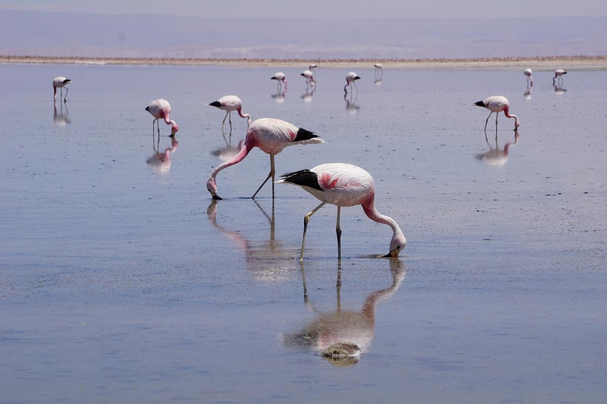 Salar de Atacama7