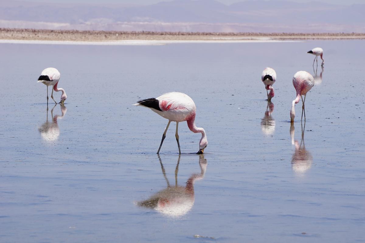 Salar de Atacama8