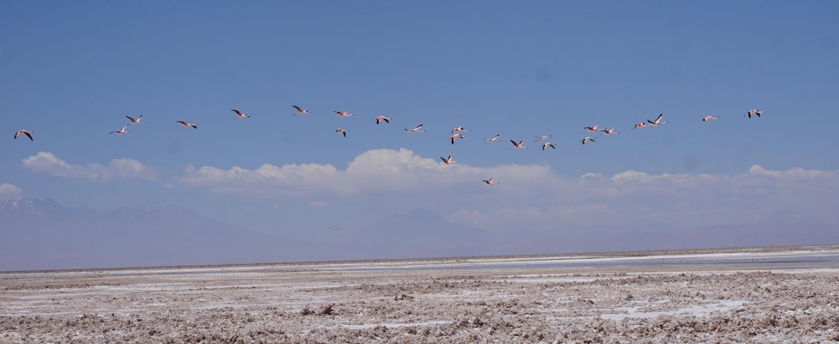Salar de Atacama9