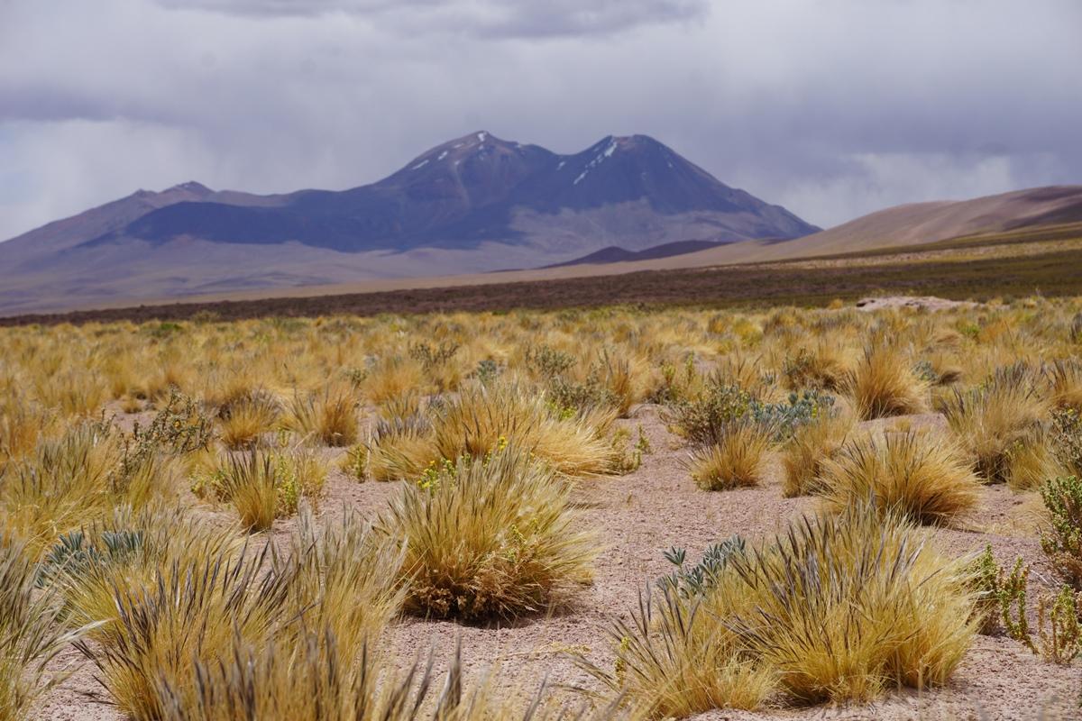 SanPedro de Atacama13