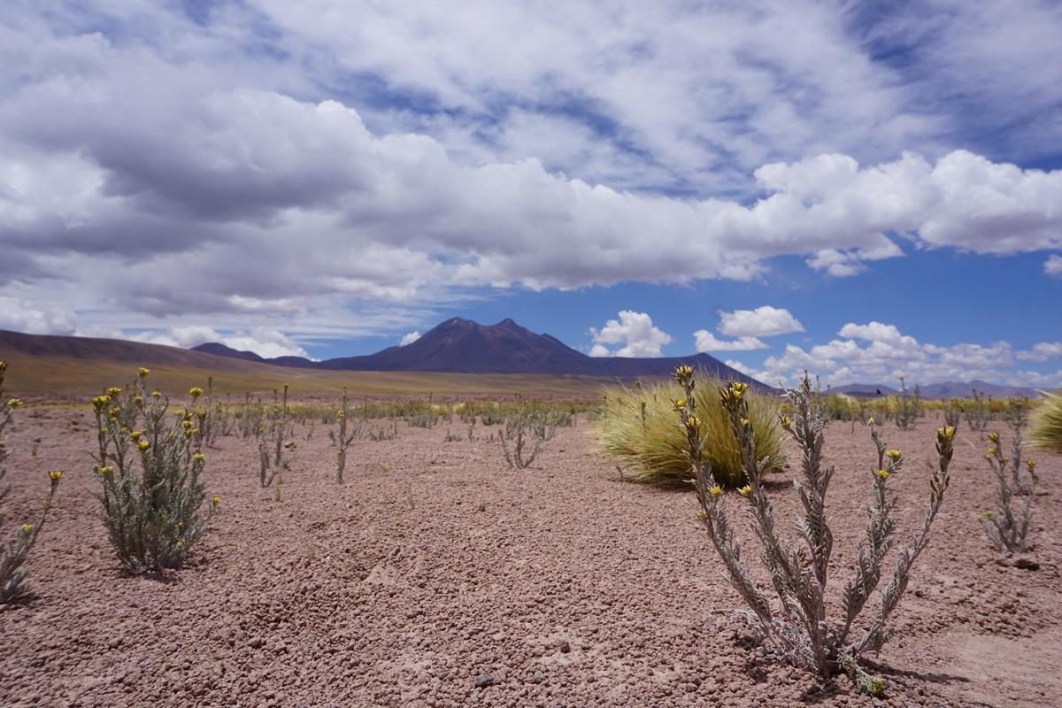 SanPedro de Atacama16